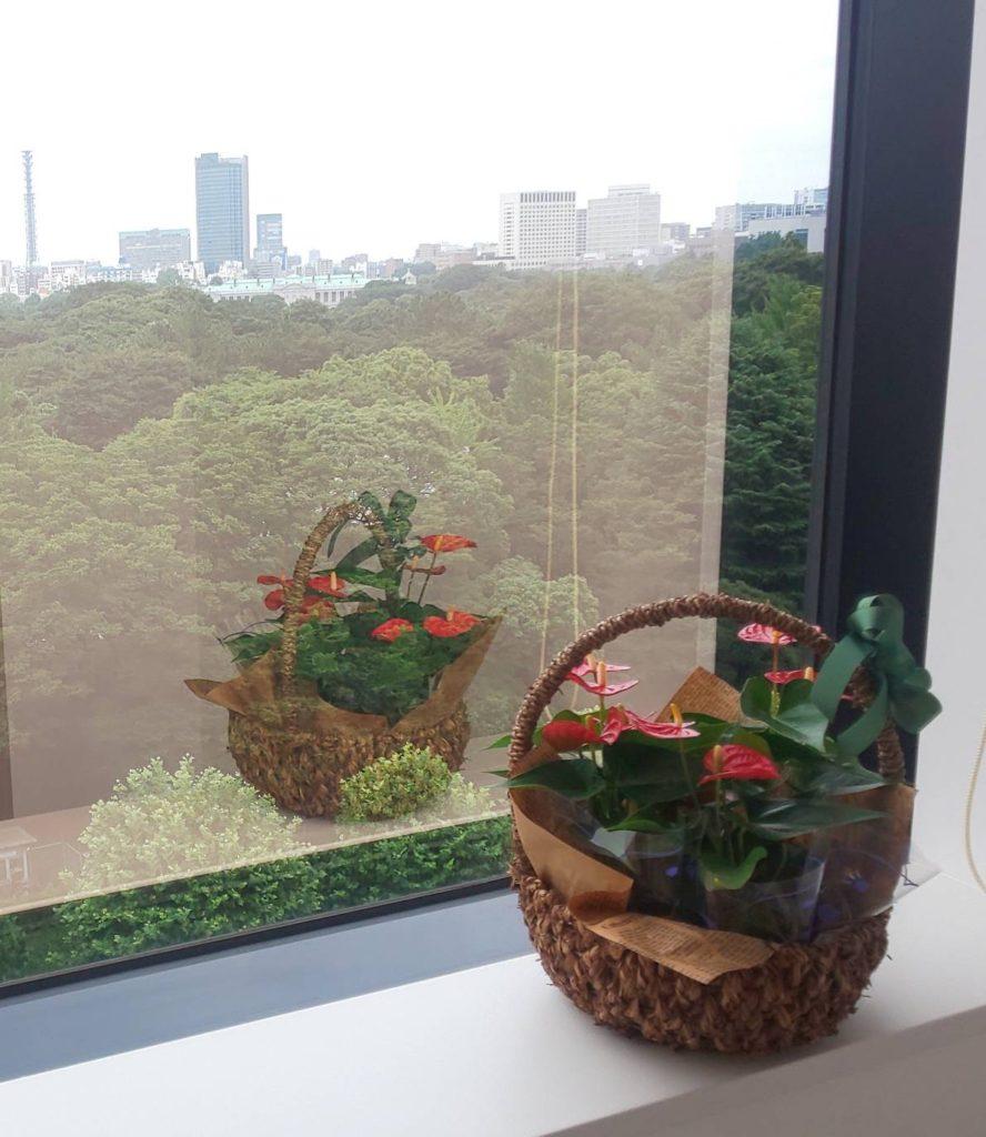 株式会社 MiMC本社から眺める「迎賓館」