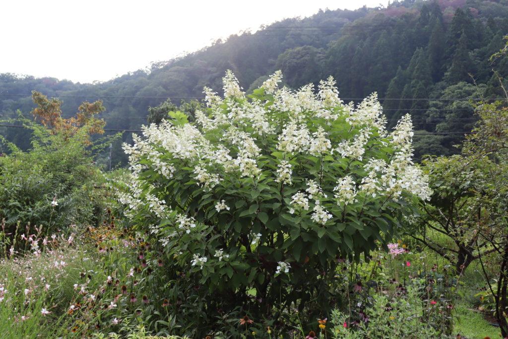 フラワーガーデンARAKI お花の小道の草花
