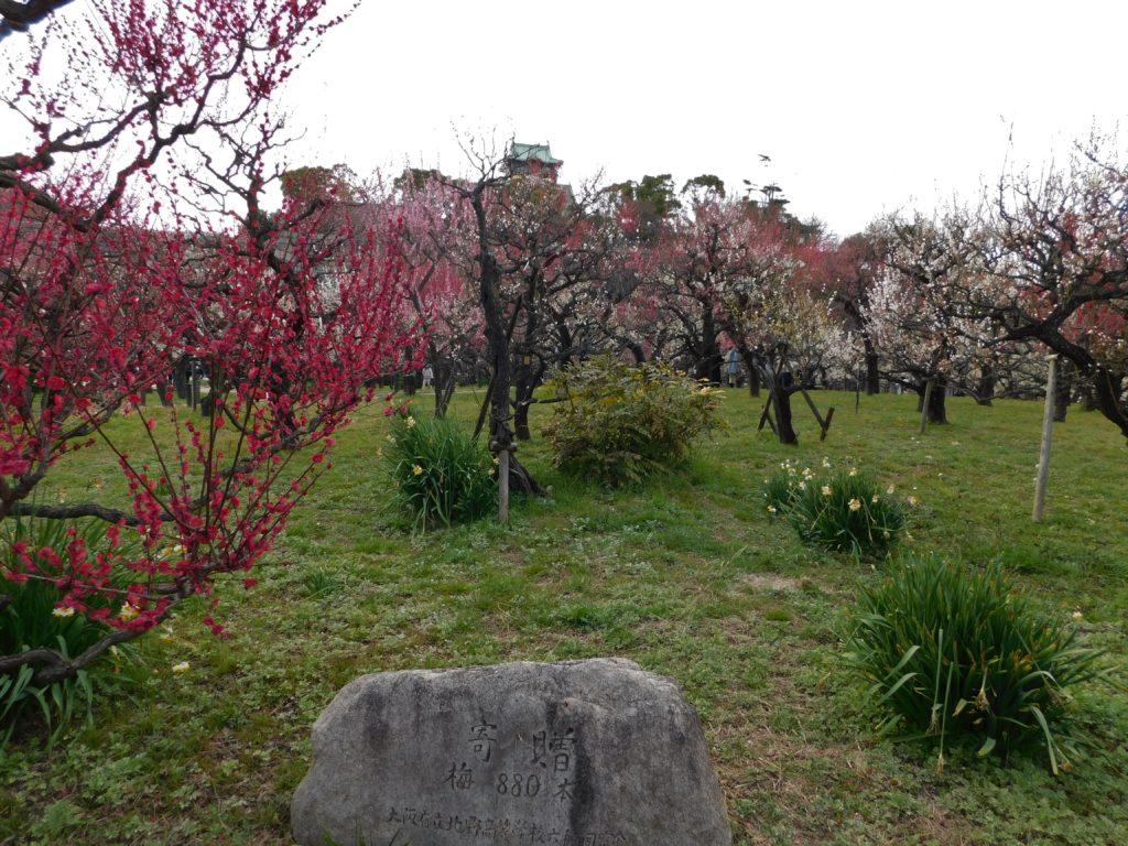 2021.2.23 大阪城梅林 写真下の岩に「寄贈 梅880本」と書かれているのが確認できます。