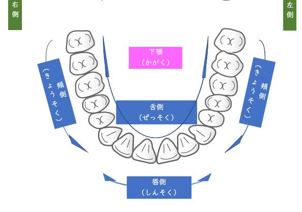 下顎(かがく):きょうそく(頬側)・しんそく(唇側)・ぜっそく(舌側)の図 医療法人福涛会
