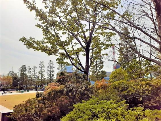 医療法人福涛会銀座バイオレゾナンスデンタルクリニックから徒歩約6分 GINZA SIX 屋上庭園 GINZA SIX ガーデン